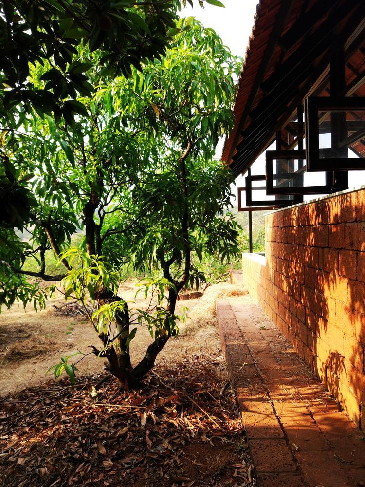 cap-vo-chong-60-tuoi-chi-300-trieu-dong-lam-nha-vuon-de-tan-huong-tuoi-gia-6.jpg