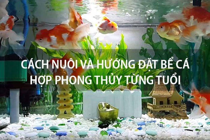 be ca phong thuy theo tuoi nhung dieu nen va khong nen lam3